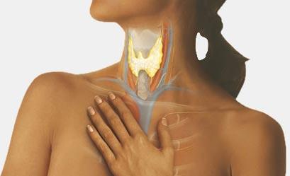 Воспаление щитовидной железы (тиреодит)
