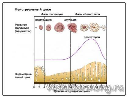 График нормы уровня прогестерона в зависимости от дня цикла у женщин